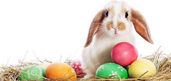 easter bunny e1519315929934